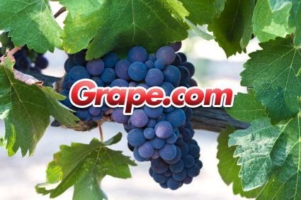 Bruce Marler gets drunk: The successful pitch of premium domain Grape.com