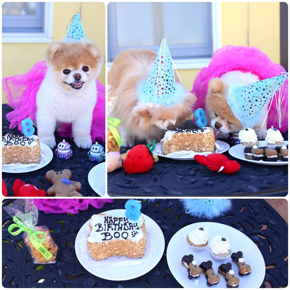 boo the dog birthday