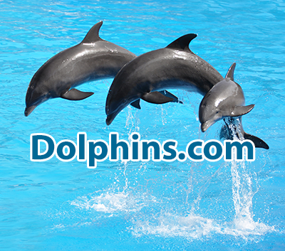 Dolphins.com - NOT for sale.