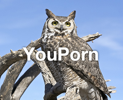 You'll find lots of hooters on YouPorn.