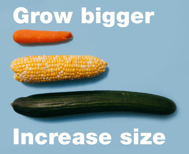 Grow bigger, increase size.